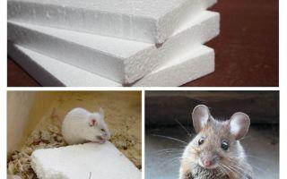 चूहों gnaw फोम करो