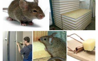चूहों gnaw गिद्ध पैनलों करो