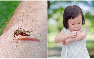 मच्छर काटने कितने दिन जाते हैं?