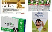 कुत्तों में fleas से छुटकारा पाने के लिए कैसे, fleas के सबसे प्रभावी साधन