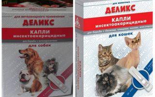 बिल्लियों और कुत्तों के लिए स्वादिष्ट पिस्सू बूँदें