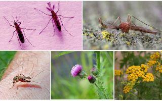 नर और मादा मच्छर क्या खाते हैं