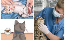 घर पर बिल्ली या बिल्ली में fleas से छुटकारा पाने के लिए कैसे