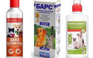 कुत्तों के लिए सबसे लोकप्रिय और प्रभावी पिस्सू शैम्पू