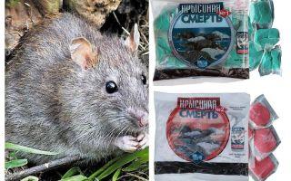 जहर चूहा मौत