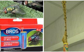 मक्खियों के लिए दुकान और लोक उपचार