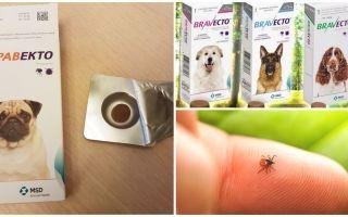 कुत्तों के लिए ticks से गोलियाँ Bravekto