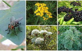 क्या गंध मक्खियों और मच्छरों से डरते हैं