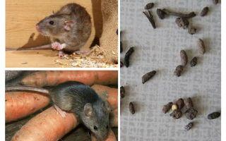 एक निजी घर में चूहे से कैसे निपटें