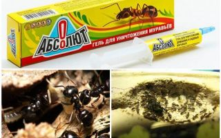 चींटियों से Absolut