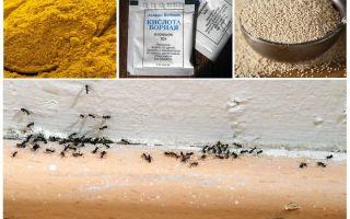 देश में घर में चींटियों से धन