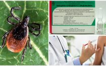 टिक-बोर्न एन्सेफलाइटिस टीका