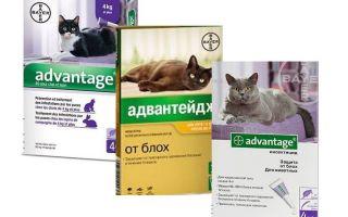बिल्लियों के लिए लाभ पिस्सू बूंदों