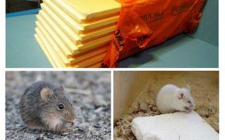 चाहे चूहों penoplex खा रहे हैं