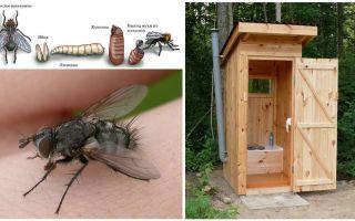 सड़क पर शौचालय में मक्खियों से छुटकारा पाने के लिए कैसे