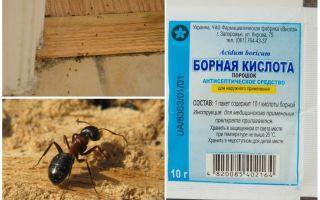 लकड़ी के घर से चींटियों को कैसे हटाया जाए