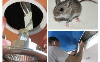 खिंचाव छत में चूहों से छुटकारा पाने के लिए कैसे