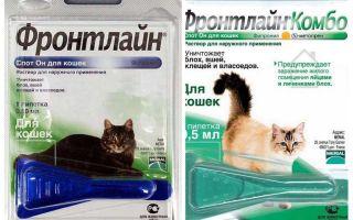 बिल्लियों के लिए फ्रंटलाइन पिस्सू बूँदें