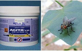 मक्खियों से अजीता का उपयोग
