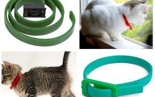 बिल्लियों के लिए सबसे अच्छा पिस्सू और टिक कॉलर