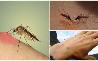 मच्छर प्रकृति में क्यों करते हैं