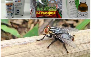 साधनों की समीक्षा से डरते हुए gadflies और gadflies क्या हैं