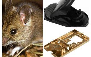 एक mousetrap कैसे रखा जाए