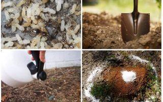 बगीचे लोक उपचार से चींटियों को कैसे प्राप्त करें