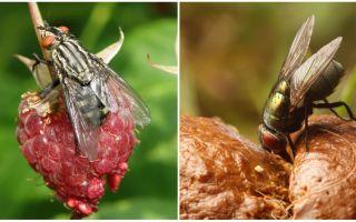 मक्खियों का उपयोग क्या है