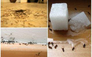 घर पर एक अपार्टमेंट से चींटियों को कैसे हटाएं