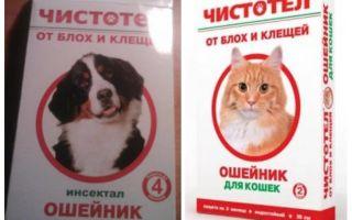 बिल्लियों और कुत्तों के लिए फ्ली Celandine कॉलर