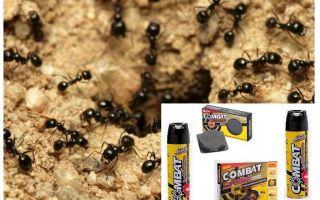 चींटी मुकाबला उपचार