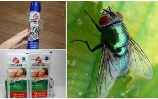 मक्खियों से रैप्टर