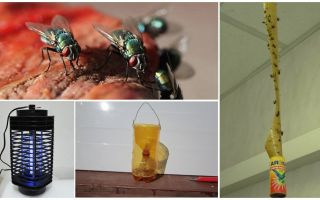 देश में मक्खियों से कैसे निपटें