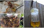 हॉर्नसेट और wasps के लिए घर का बना जाल