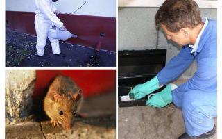 विशेष सेवाओं द्वारा चूहों और चूहों का उन्मूलन