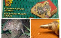 चूहों से गोंद