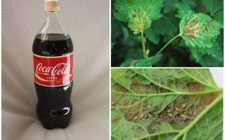 एफिड से कोका-कोला