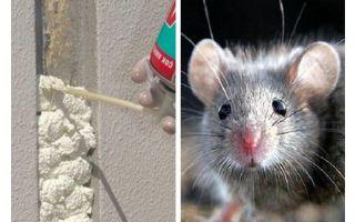 चूहों फोम खाते हैं