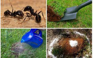 बगीचे लोक उपचार में चींटियों से छुटकारा पाने के लिए कैसे