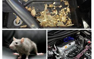 कार से चूहों को कैसे निकालें
