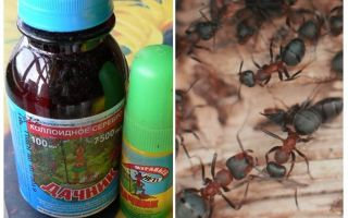 चींटियों से ग्रीष्मकालीन निवासी का मतलब है