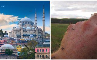 क्या तुर्की में मच्छर हैं