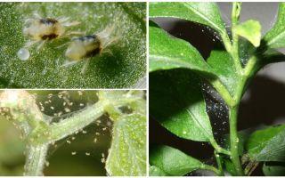 घर के पौधों पर मकड़ी के काटने से कैसे छुटकारा पाएं