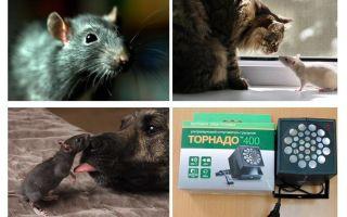 चूहों और चूहों से डरते हैं क्या?