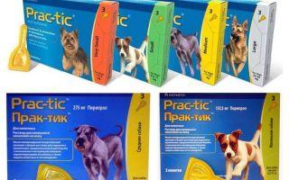 कुत्तों के लिए fleas और ticks से प्रथाओं को छोड़ देता है