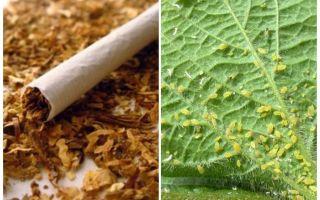 एफिड्स के खिलाफ तंबाकू