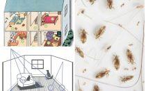 घरेलू fleas से छुटकारा पाने के लिए कैसे