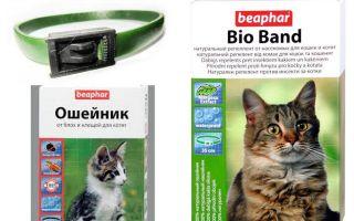बिल्लियों और कुत्तों के लिए fleas से कॉलर Beafar