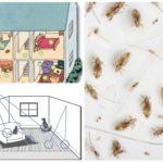आवास घर में fleas